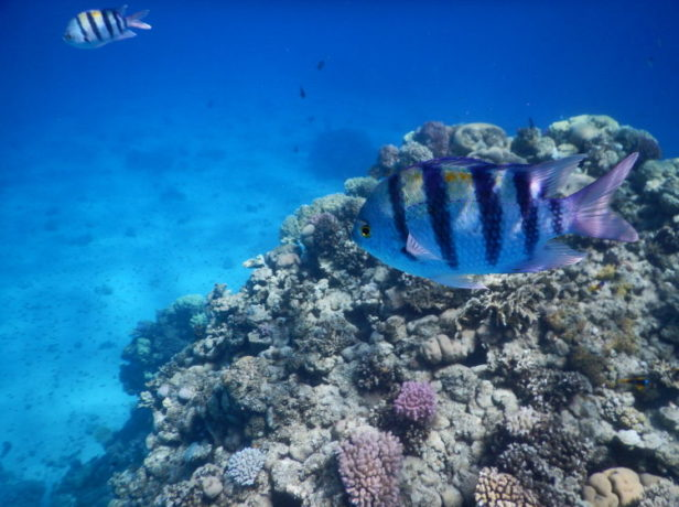 Great vacation in Eilat – Things to do